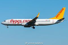 DSC_1007 (Gespot....) Tags: tccpm pegasus boeing 737