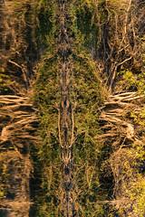 20160825_ZambeziReflectionsPortraits_MCM-5 (mcmessner) Tags: abstract africa bjadventures morning morningboatride reflection rorschak southafrica2016 sunrise tongabezilodge zambeziriver zambia livinstone