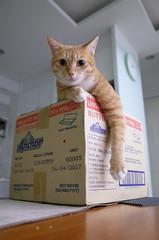 R0091067 (lazybonessss) Tags: ricohgrii ricoh cat momo kitten2