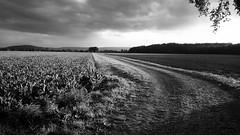 Herbst (salparadise666) Tags: herbst schwarz weis monochrome niedersachsen hannover calenberger land wolken deutschland nils volkmer