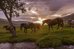Horse trip on Icelandic horses (Anna.Andres) Tags: iceland sland slenskihesturinn icelandichorses horses horse hestafer horsetrip annagumundsdttir canoneosrebelt2i norurland srlastair fnjskadalur