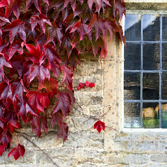 Autumn in the Cotswolds (monica.shaw) Tags: autumnequinox equinox