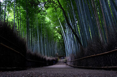 Arashiyama Bamboo Grove (pedro smithson) Tags: pedrosmithson japan nikon nippon kyoto kytoshi asia travel d5100 bamboo grove arashiyama green longexposure night afternoon motion ground light leafs peace calm people path walk