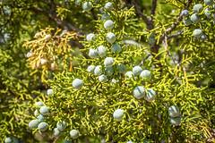 Seed Pods (Serendigity) Tags: seedpods usa landscape desert archesnationalpark nature nationalpark outdoors unitedstates utah plant