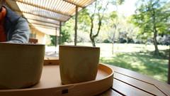 DSC05549 (macco) Tags: nex5r sony   tea greentea gotenba gotemba