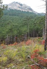 Dolossi, Yalta (Extrud) Tags: yalta dolossi wald natur herbst herbstfarben ялта долоссы лес осень berg berge горы каньен