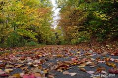 Foliage in Echo lake bike trail (Sarah Jo 3) Tags: foliage biketrail echo lakerecreation path