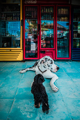 Dogs (Luis Montemayor) Tags: dogs holbox store tienda floor piso colors colores