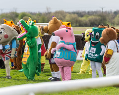 Scenes from the Mascot Derby (Steve Barowik) Tags: horse fence nikon yorkshire nh jockey chase a1 races jumps racecourse trainer saddle stables obstacles hurdle d600 wetherby 70200mmf28 nationalhunt ls26 stevebarowiksb