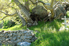 A Little Bit of Country (socaltoto11) Tags: california mountains boulders wildflowers kerncounty countrylandscapes hartflatcalifornia