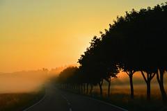Morgenstimmung auf der B 6 (Sandsteiner) Tags: nebel fog sunrise sonnenaufgang sommer landschaft sandsteiner