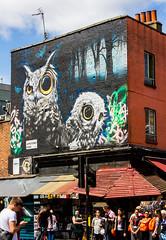 the owls of jamestown road (PDKImages) Tags: street city windows girls urban streetart london art girl beauty graffiti women scenery rooftops faces skin camden stripes murals caged shoreditch walls contrasts owls