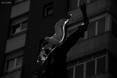 Seagull (Moira_Fee) Tags: black white blanco y negro byn bw seagull gaviota pajaro bird gijon xixon asturias asturies espaa spain building blue cyan nature ciudad city paisaje landscape moira fee animal close up contraluz artistic