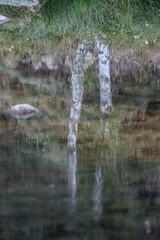 peinture numrique (jemazzia) Tags: outside extrieur nature reflet rivire eau douceur