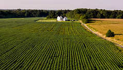 All to the Farm (Geoff Livingston) Tags: farm virginia soybeans land leadinglines farmhouse countryside