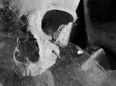 Napoli (Vicen Torrent) Tags: napoli npols npoles skull calavera teranyina telaraa naples spider web fontanelle cementerio cementiri cimitero delle cemetery friedhof bones huesos death mort muerte
