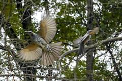 DSCN7412 (jinkemoole) Tags:    bulbul bird