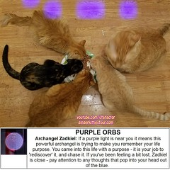Cats and Purple Orbs (youtube.com/utahactor) Tags: ginger gingerkittiesfour website blog youtube facebook videos hd 1080p 4k canon sony zeus phoebe helios athena orange yellow red food eating purple orbs gata gato chats chatons samsungs7