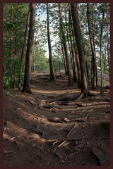 Follow me (toddrappitt) Tags: scenery scenic paths trails august breathtakinglandscapes vegetarian6 forest woods trees nature canada ontario provincialparks algonquinpark t4i rebel canon