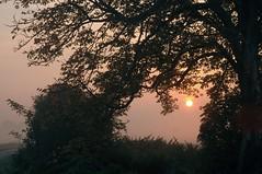 Morgenstund hat Gold im Mund - das Tor zum Tag; Bergenhusen, Stapelholm (47) (Chironius) Tags: stapelholm bergenhusen schleswigholstein deutschland germany allemagne alemania germania    ogie pomie szlezwigholsztyn niemcy pomienie morgendmmerung sonnenaufgang morgengrauen  morgen morning dawn sunrise matin aube mattina alba ochtend dageraad zonsopgang   amanecer morgens dmmerung nebel fog brouillard niebla gegenlicht silhouette rosids malvids sapindales seifenbaumartige sapindaceae seifenbaumgewchse hippocastanoideae rosskastaniengewchse acer ahorn baum bume tree trees arbre  rbol arbres  rboles albero  rvore aa boom trd