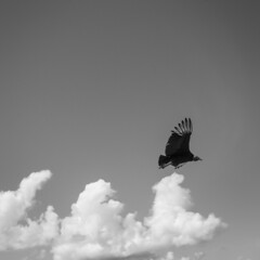 Flyby (lvpz) Tags: bw contrast einfarbig outdoor bird clouds black white flyby sky