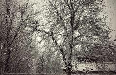 12501743_1522042274763027_1547519947_n (dragica_basaric) Tags: winter snow wonderland magic magical snowy flake nature green colours streets treet postcar postcards love train phot january 03 2016 photo photography d b danchy92 dragicabasaric lapovo serbia srbija srb sumadija dbphotography