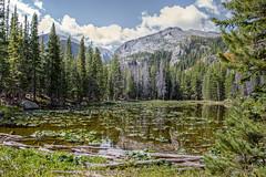 The lily pads of Nymph Lake (cindytaylor) Tags: nymphlakermnp mountainlake hike lilypads bluesky rockymountainnationalpark