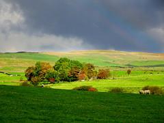 Rainbow, Wales, October 2016 (7) (Janpram) Tags: gladfryn wales stormysky darkclouds darksky trees autumncolours autumn autumncolour clouds rainbow
