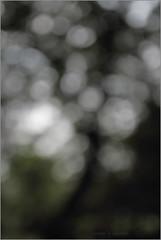 i love trees .. (nevil zaveri (thank you for 10 million+ views :)) Tags: zaveri wilderness nature gujrat india photography photographer images photos blog stockimages photograph photographs eru navsari gujarat nau nevil defocus nevilzaveri stock photo trees bokeh