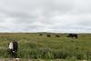 Dungeons Provincial Park (claudiu_dobre) Tags: dungeons provincial park cows field newfoundland canada landscape nature elliston newfoundlandandlabrador ca