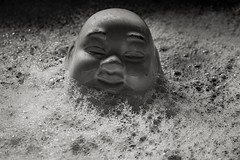 Bathing Buddha (Evoljo) Tags: buddha butterdish washing bubbles clean suds eyes baldhead sink water head ears nose nikon blackwhite d500