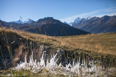 -*- Ice Pikes *-* (samuel.devantery) Tags: ice pike pijes winter valais valaiswallis valley valdanniviers anniviers mountains mountain mount switzerland swiss suisse hike high hiking hight highlight iced picture