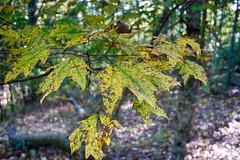DSC05461-63_HDR (Capt Kodak) Tags: autumn chattahoocheerivernationalrecreationarea fall hdrefexpro2 madefrom3images medlockbridgepark nationalparkservice nikcollectionbygoogle niksoftware photomerge