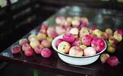 Урожай 2016 (Towy-Yowy) Tags: zuiko om olympus energodar c41 film 135 kodak энергодар яблоки урожай дача