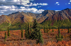 Denali Autumn Textures (Cole Chase Photography) Tags: denali alaska autumn fall fallcolors autumncolors canon eos5dmarkiii