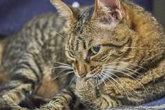 II (Isien Kuo) Tags: taiwan penghu cimei qimei chimei island exposure photography photo animal cat cats moment fujifilm xpro2 xpro xmount x zeiss carlzeiss touit touit2850m 50mm 28 macro planar