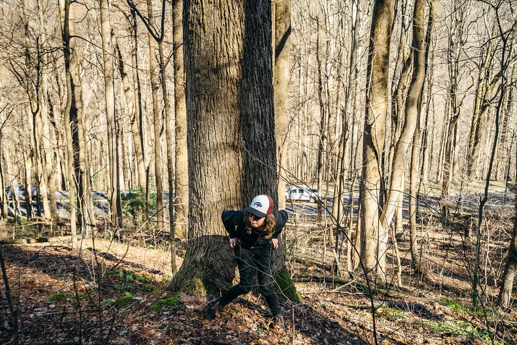 In peeing wood