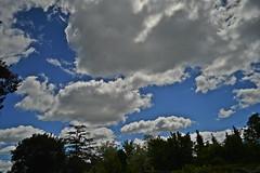 DSC_1420 (PaloSalvatore) Tags: argentina buenosaires pilar nubes clouds lightblue celeste sky cielo beautifulday hermosodia nature landsape paisaje photography fotografia naturephotography fotografiaalanaturaleza photo foto nikon trees arboles streetphotography fotografiacallejera street calle