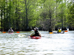 Lowcountry Unfiltered - Lake Marion Ghost Town Paddle - April 2013 (272) (greenkayak73) Tags: friends beagle nature america fun lucy southcarolina adventure kayaking ghosttown mrrussell riverdog lakemarion greenkayak73 randomconnections photopaddling lowcountryunfiltered nitrorev johnatgcc rockscemetery