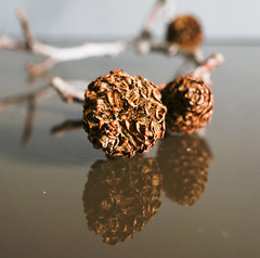 Dried cones from the alder tree (Elisafox22) Tags: macro tree lens sony dried mondays cones alder f35 e30mm nex6