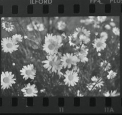 (dice uh l l.) Tags: flowers flores blancoynegro 35mm iso100 vivitar