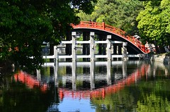 Sumiyoshi Taisha  (Hyogoman) Tags: travel bridge reflection japan 50mm nikon shrine asia   osaka nikkor kansai sumiyoshi    d7000