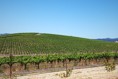 The most famous hill in the world (npzo) Tags: wallpaper sonoma xp bliss