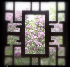 *Botanical Garden* (army-brat) Tags: window chinesegarden montrealbotanicalgarden