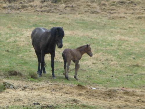 Newborn horse