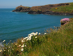 Abereiddy (Messent) Tags: pictures flowers sea nature poetry wildflowers pembrokeshire abereiddy mayweed landscapedetail poetryandpicturesinternational poetryforall