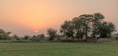 0W6A6870 (Liaqat Ali Vance) Tags: trees pakistan sunset nature landscape photography evening google ali punjab vance liaqat