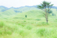 6Tonomine Highland (anglo10) Tags:   japan   field
