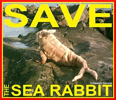 SAVE THE SEA RABBIT, official poster, design by Dr. Takeshi Yamada. Coney Island Sea Rabbit Center.  2014-01 FINAL (searabbits23) Tags: searabbit seara takeshiyamada  taxidermy roguetaxidermy mart strange cryptozoology uma ufo esp curiosities oddities globalwarming climategate dragon mermaid unicorn art artist alchemy entertainer performer famous sexy playboy bikini fashion vogue goth gothic vampire steampunk barrackobama billclinton billgates sideshow freakshow star king pop god angel celebrity genius amc immortalized tv immortalizer japanese asian mardigras tophat google yahoo bing aol cnn coneyisland brooklyn newyork leonardodavinci damienhirst jeffkoons takashimurakami vangogh pablopicasso salvadordali waltdisney donaldtrump hillaryclinton endangeredspecies save