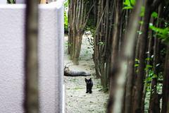 Today's Cat@2016-08-04 (masatsu) Tags: cat catspotting thebiggestgroupwithonlycats pentax mx1